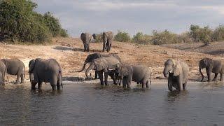 Chobe Safari Botswana
