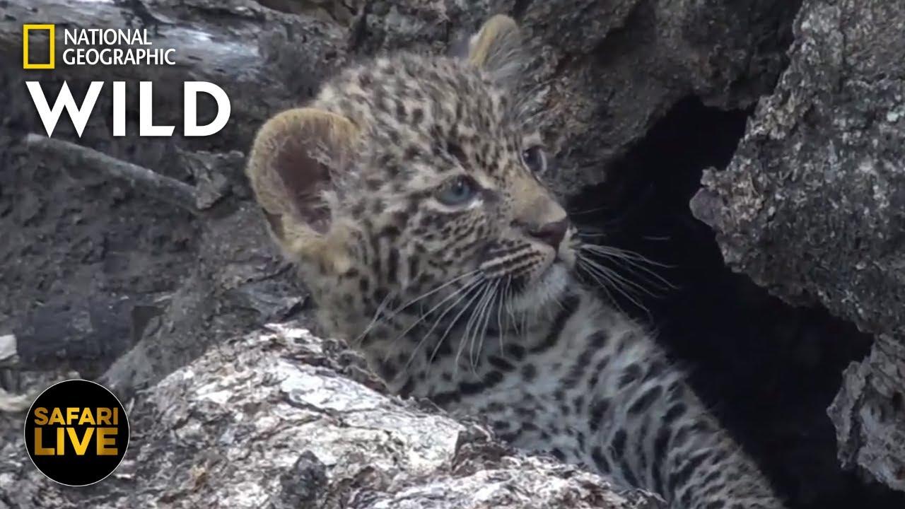 Safari Live - Day 270 | Nat Geo Wild