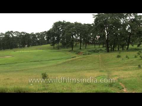 Shillong Golf Link - Unique natural golf course in Asia