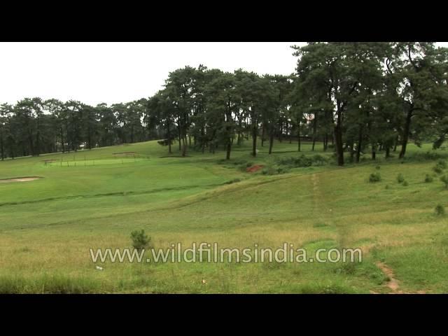 Shillong Golf Link - Unique natural golf course in Asia