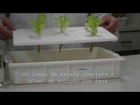 Hidroponia de alface