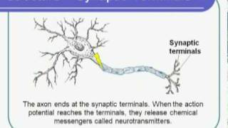 Biological Sciences Neuron Structure