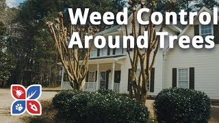 Do My Own Lawn Care - Weed Control Around Trees