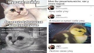 Ржачные мемы ! Кота везут на кастрацию ! Что думает об этом кот ?