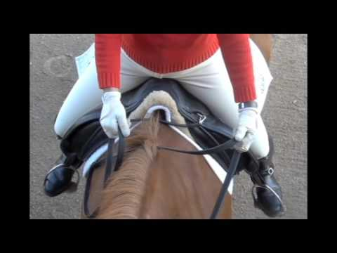 Direct Leading Rein Aids