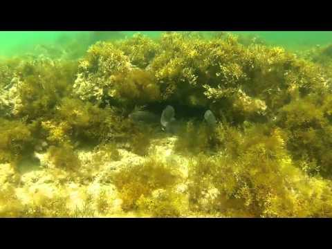 Snorkeling in Qatar HD