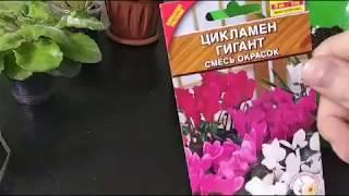 Комнатные растения из семян!