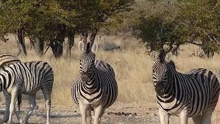 namibie jjmf