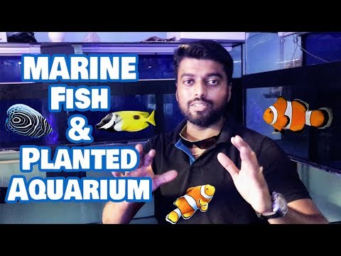 Marine Fish Aquarium Kolathur Tips - Ornamental Pets And Fish Aquarium