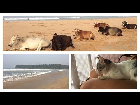Travel Vlog || Agonda Beach, Goa, Indien 🇮🇳