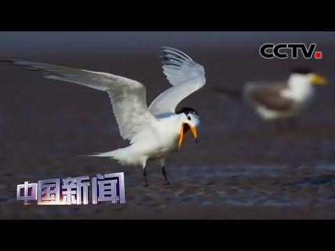 [中国新闻] 福建晋江发