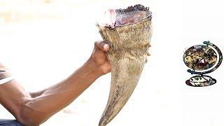 Inside The Rhino Horn Trade | Promo | Stroop