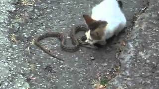 Little cat and snake kotenok i zmeya) 360