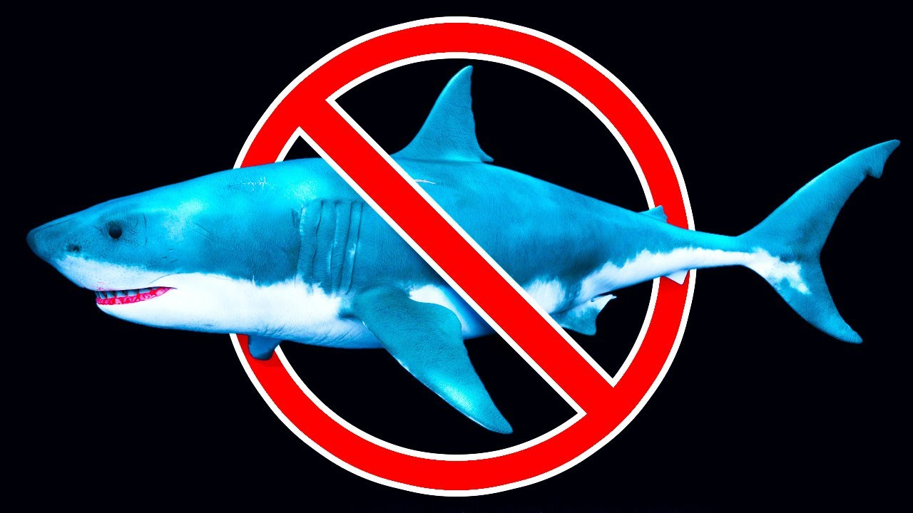 What Really wiped out Megalodon Shark