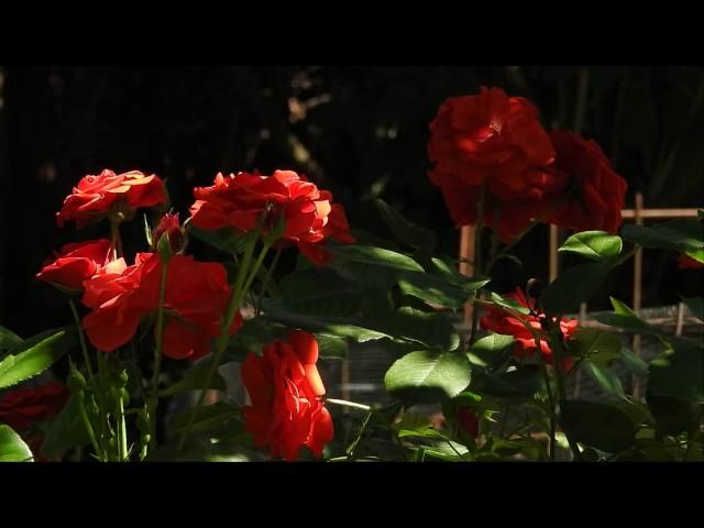 Garden Relax / Rövid kerti lazulás