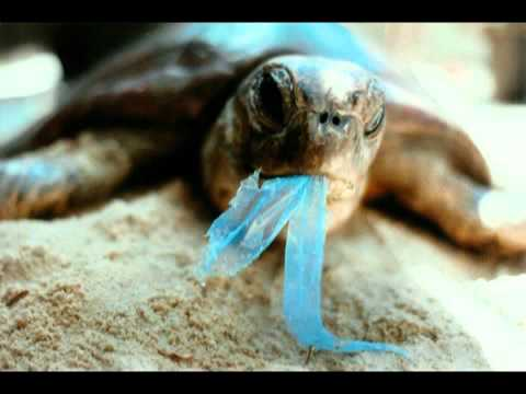 Great Garbage Patch Kills Sea Life