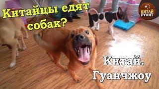 Китайцы едят собак? Приют спасенных животных. Китай. Гуанчжоу