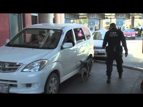 U.S. Customs and Border Protection K-9 (Search dog) teams in action