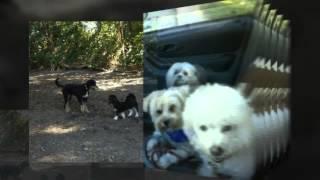 The Bark Zone Inc. - Group Dog Walking Toronto