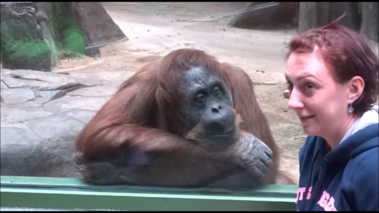 サル・ゴリラ・チンパンジー祭り!動物園の動画集☆
