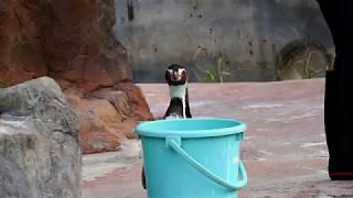 【東武動物公園】グレープ君の食事シーン
