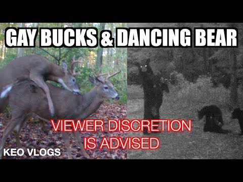 Gay Bucks & A Dancing Bear Is A Must See!!!