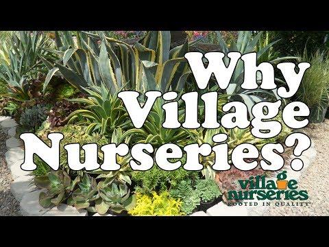 Why Village Nurseries? - Save Water, Stay Green Video Series