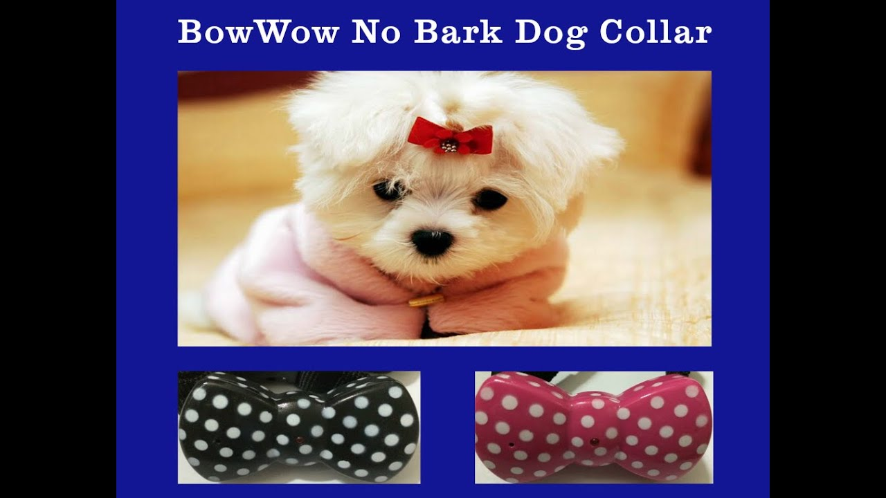 Amazon Dog Bark Collar
