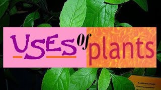 Uses of Plants for Kids