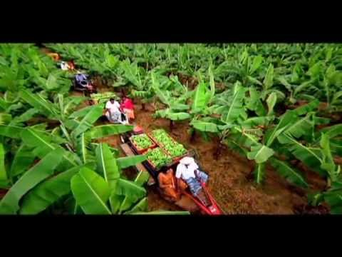 CIC Agri Businesses Corporate TV Commercial