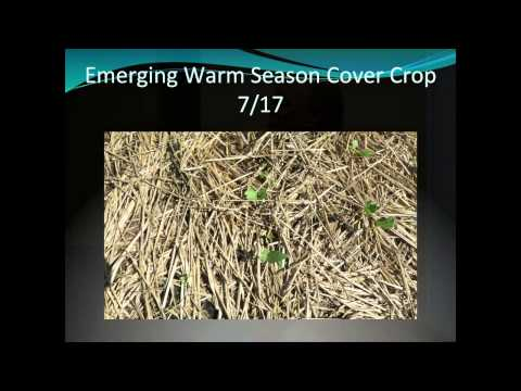 Grazing Cover Crops and Benefits for Livestock Operations - Gabe Brown