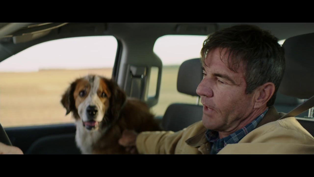 A Dog S Purpose Bailey Finds Ethan