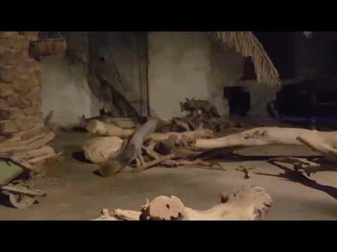 Sharjah wildlife centre