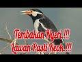 Masteran Burung Jalak Suren Full Isian Kasar Gacor  Mp3 - Mp4 Download