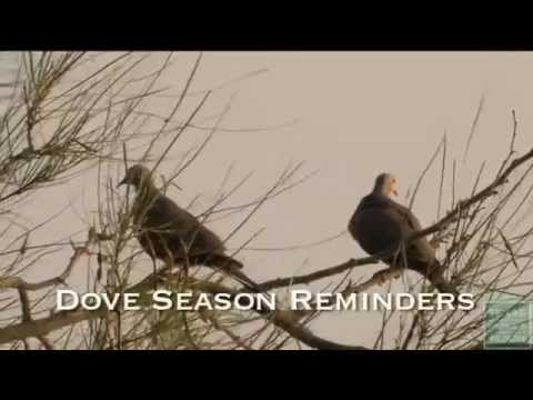 Dove Season Reminders 2014-15 - Texas Parks And Wildlife [Official]