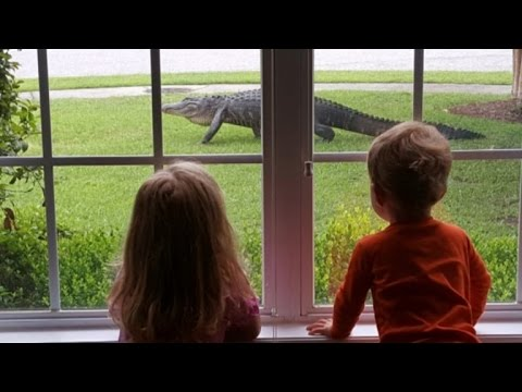 Caught on Camera: Shocked Kids Watch Alligator Slither Through Yard
