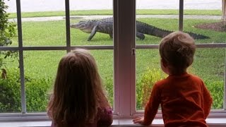 Caught on Camera: Shocked Kids Watch Alligator Slither Through Yard