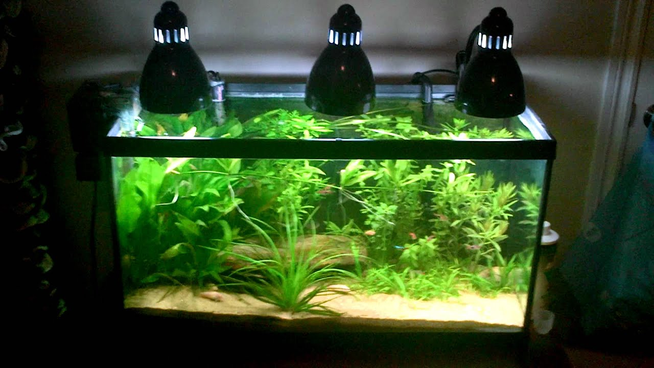 Clip on lamp aquarium lighting youtube for Fish tank lighting