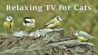 Relaxing TV for Cats : Calm Your Cat TV with Gentle Bird Sounds
