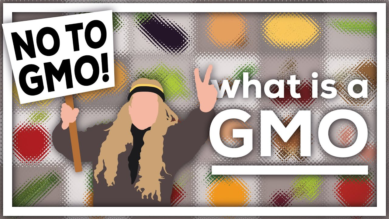 What is a GMO? - YouTube