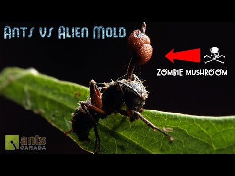 Ants vs. Alien Mold