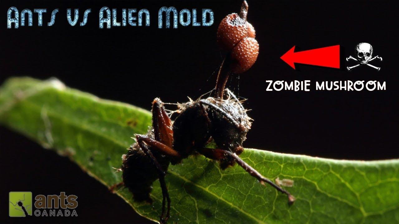ants-vs-alien-mold