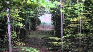 Ecoutez le brâme du cerf en forêt de Compiègne !