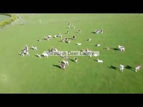 Welcome to Fife aerial tour of Scottish Deer centre