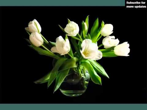 White Tulips In Vase Beautiful White Folwers Images Youtube