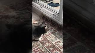 Cute Funny Cat Imitates Crows Caw And Makes Bird Sounds