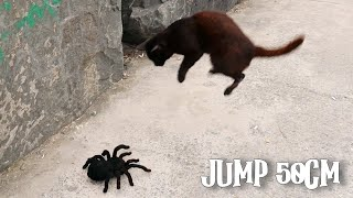 Remote Controlled Spider Prank Just For Laughs – Scares Cats