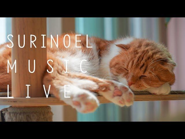 수리노을과 함께 음악 힐링 방송 19.6.1 LIVE 【SURI&NOEL】