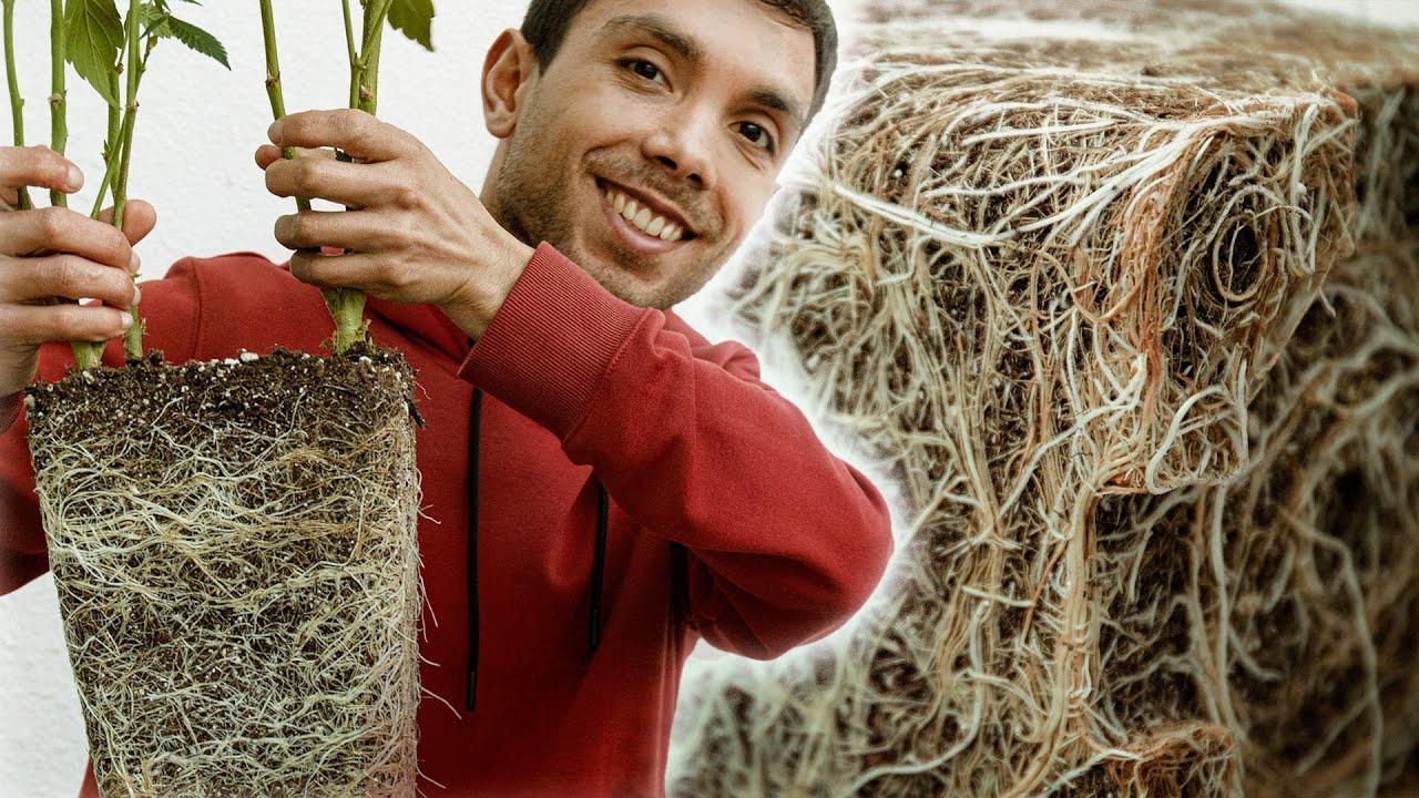 Guía básica para TRASPLANTAR y cultivar ESQUEJES