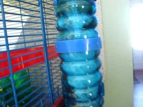 tube hamster Sister tempted.